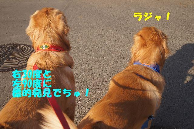 8_20130307013409.jpg