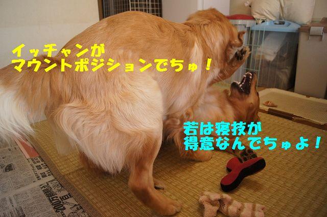 8_20130307185253.jpg