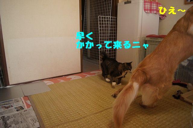 8_20130313051251.jpg