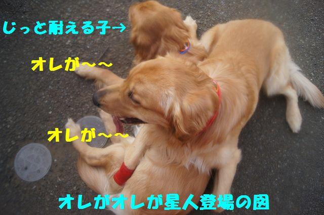 8_20130313164245.jpg