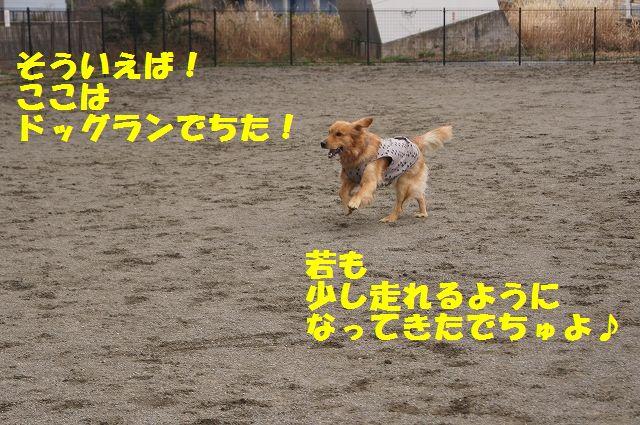 8_20130315170227.jpg
