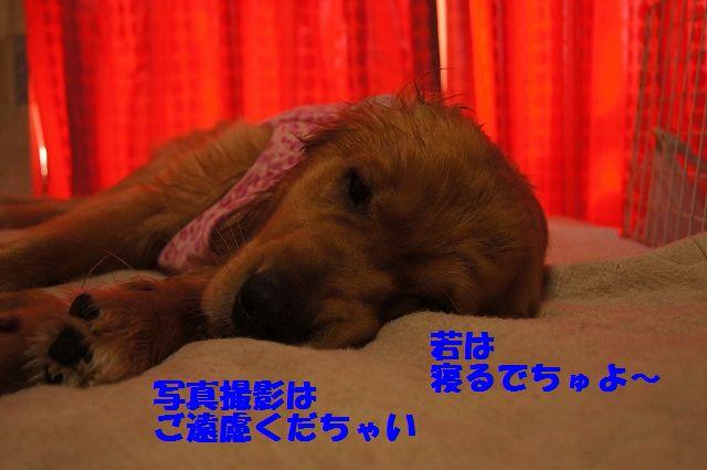 8_20130320215206.jpg