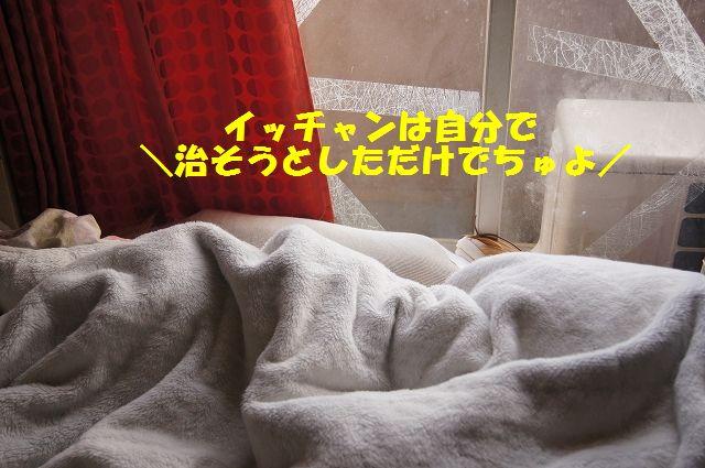 8_20130324045747.jpg