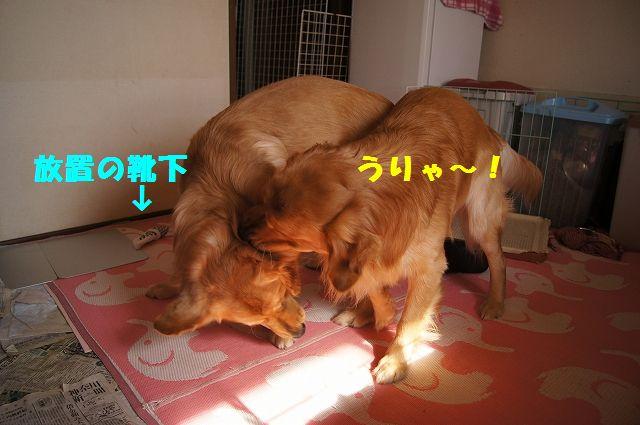 9_20130208185845.jpg