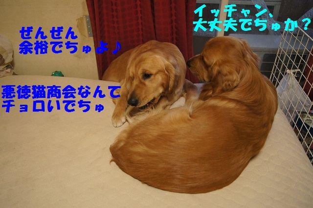 9_20130305045817.jpg