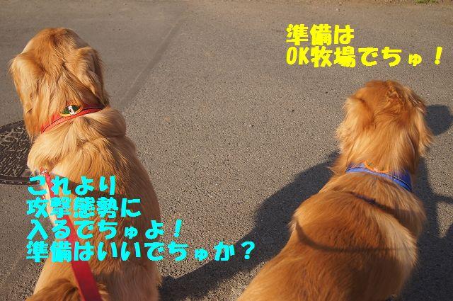 9_20130307013410.jpg