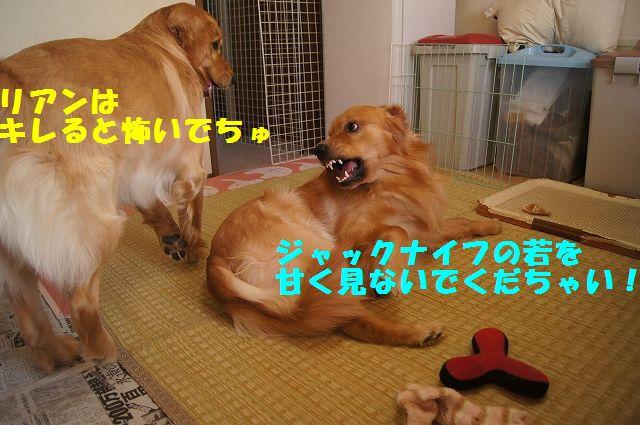 9_20130307185254.jpg