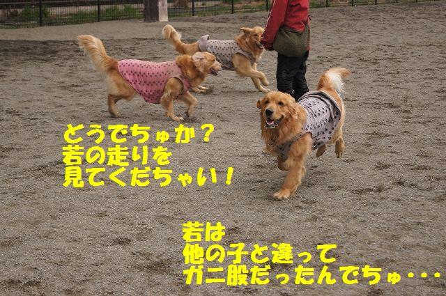 9_20130315170229.jpg