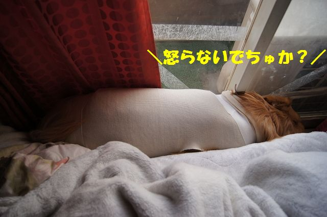 9_20130324045749.jpg