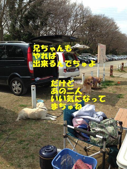 9_20130325101839.jpg