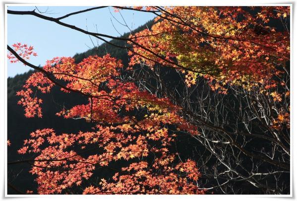 11.12/4塔ノ岳