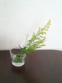20130129_見切り品の花2