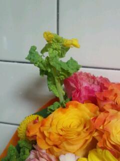 20130311_菜の花