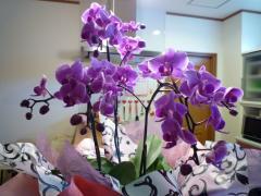 お客様から頂いたお花