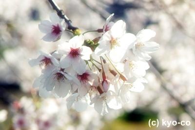 20110413004.jpg