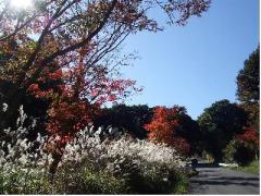 霧島の秋 1