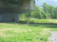 2011_0603登川河川公園0010