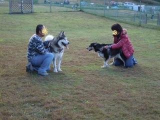 dogrun08_20091114000043.jpg