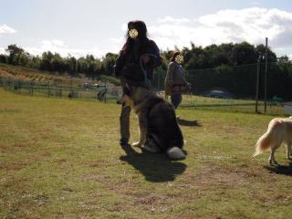 dogrun19_20091114163148.jpg