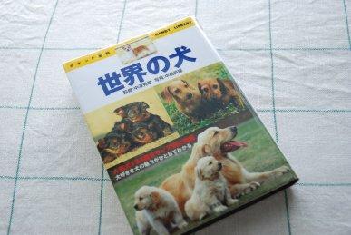 dog10-1.jpg