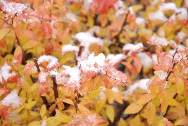 snow10-1.jpg