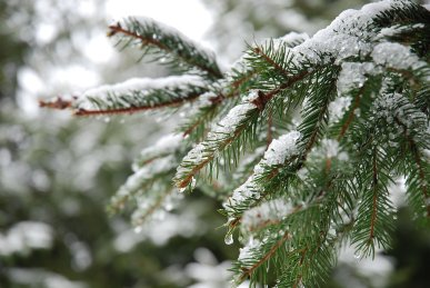 snow10-2.jpg