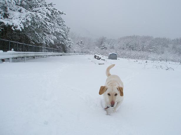 初雪遊び1
