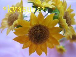 IMG_5214_convert_20110617152518.jpg