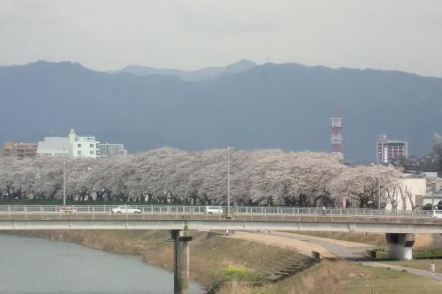 桜 STREET