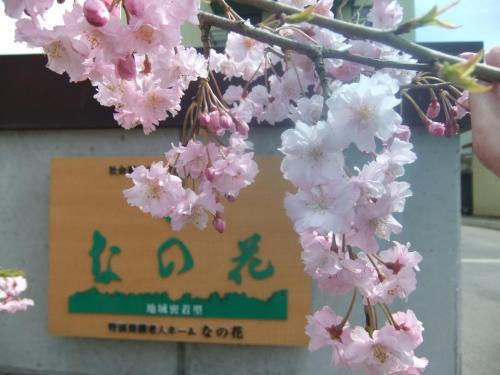 桜となの花