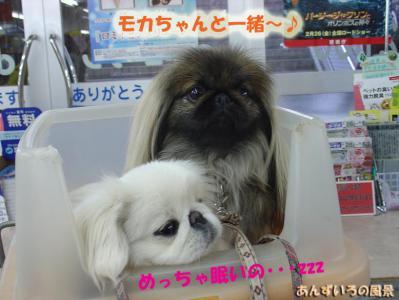 OW ペット&グリーン福岡東店