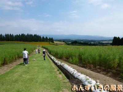 OW 生駒高原