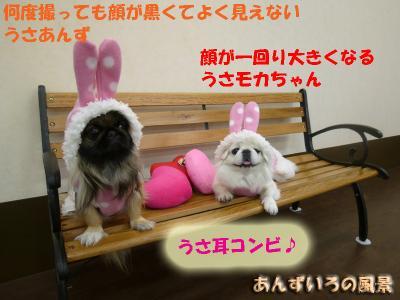 ウサギとクマとランチ