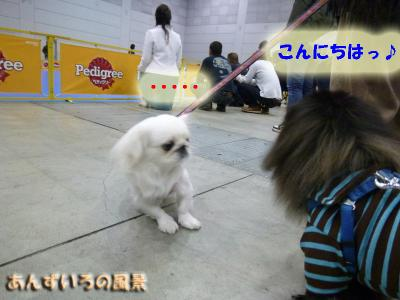 FCIドッグショー&OW
