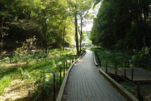 県立東高根森林公園