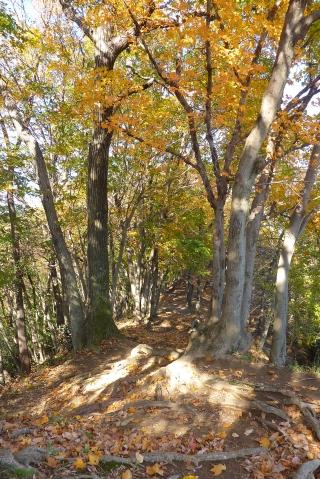 七沢森林公園