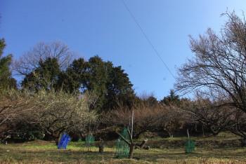 広橋梅林10