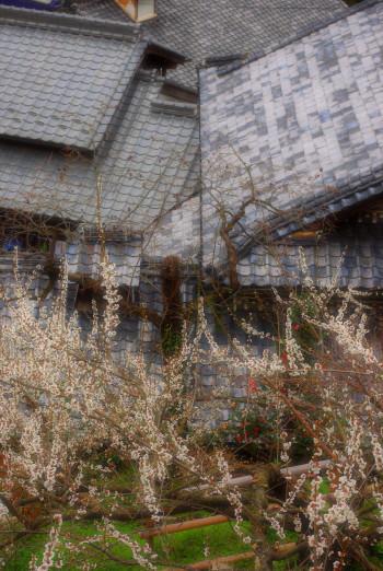 屋根と白梅