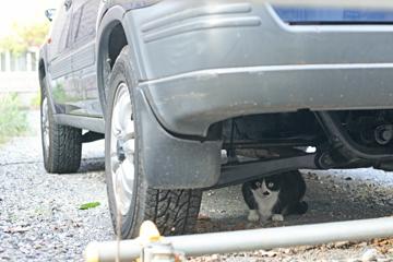 車の下にひそんでます