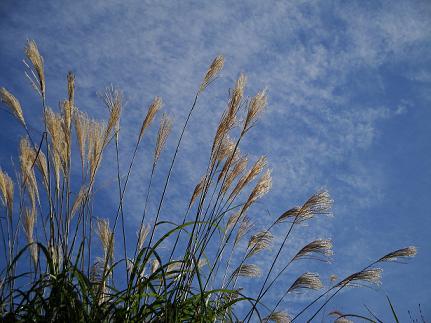 空と雲とすすきと・・・