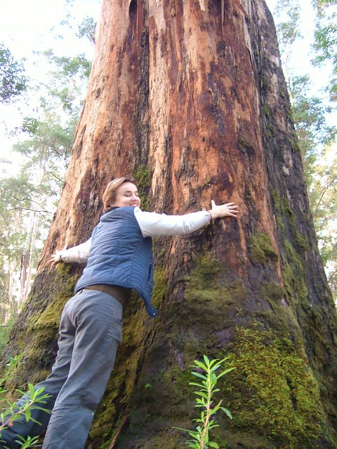 Big Tree hug