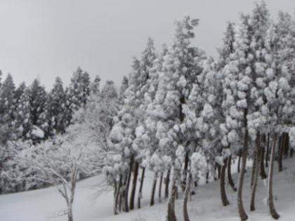 パノラマリフト横の樹氷