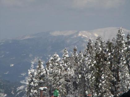 雪の樹林と山嶺