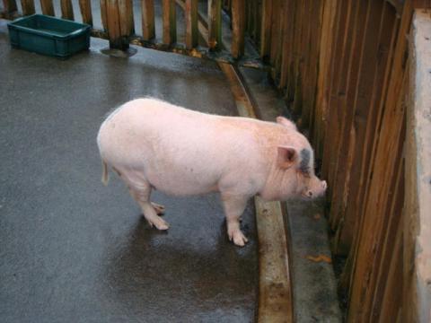福豚の里とんとん広場にて