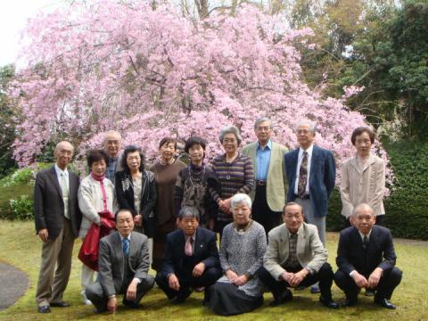 咲き誇るシダレ桜の下で記念撮影