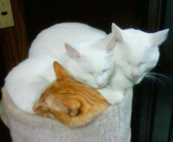 白猫組+ナミ
