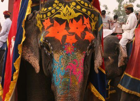 g-spl-elephant.jpg