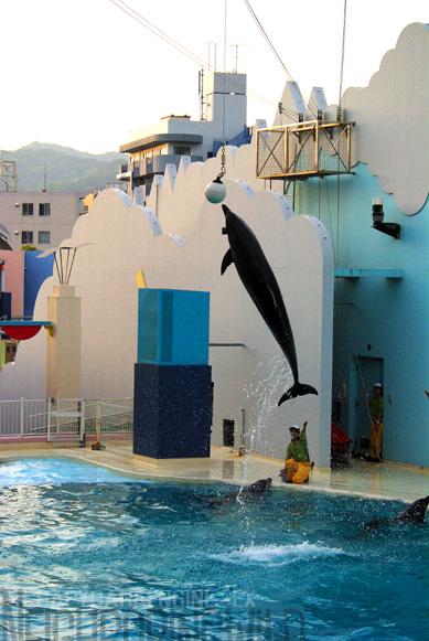 dolphinback1.jpg