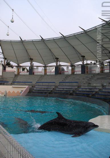 dolphinback5.jpg