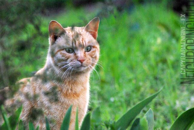 kouencats01.jpg